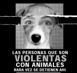 20141104182017-animal.jpg