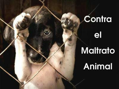 20170131162314-maltrato-animal-imagen.jpg