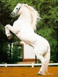 20141119185525-caballo-levantado.jpg
