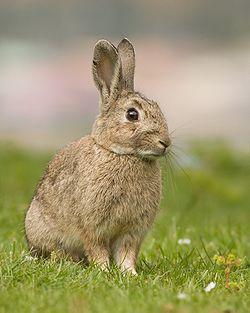 20150424183558-conejo.jpg