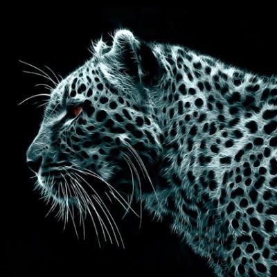 20170323203512-leopardo-1440x900.jpg