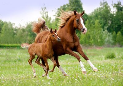 20170602182650-caballos-2.jpg